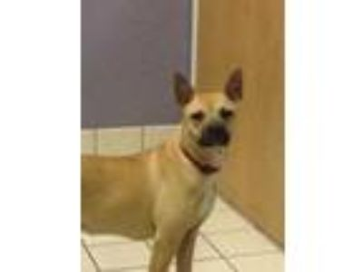 Adopt Ms Boss a Tan/Yellow/Fawn Mixed Breed (Medium) / Mixed dog in Charleston