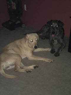 8 month old pups free to good home