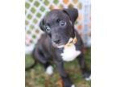 Adopt Daisy a Brindle Terrier (Unknown Type, Small) / Mixed dog in E.