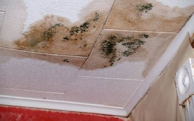 Fort Collins Mold Removal