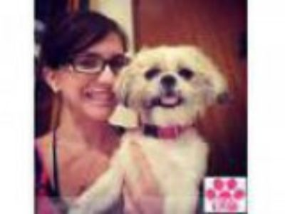 In-Home Pet Care No Matter What the Pet is We ll Love Them as if