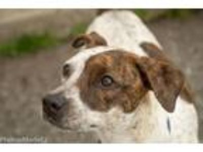 Adopt Penny a Pointer, Terrier