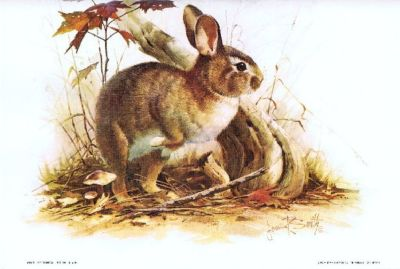"""Cottontail"" Bunny Rabbit Litho - by Artist, James R. Smith - 1979 - Unframed"