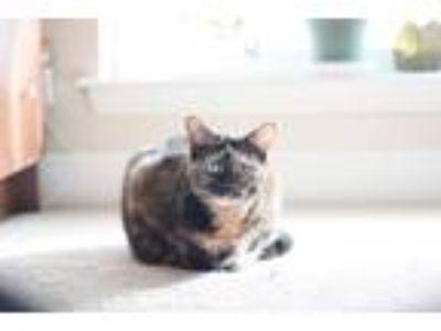 Adopt Margot a Tortoiseshell Domestic Shorthair cat in Los Angeles