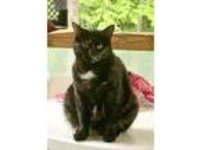 Adopt Rhonda a Tortoiseshell Domestic Shorthair (short coat) cat in Saranac