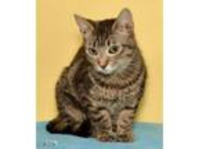 Adopt Lorna a Domestic Short Hair