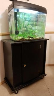 Craigslist - Pet Fish for Sale Classified Ads in Kent