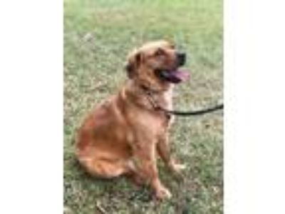 Adopt Hope a Retriever