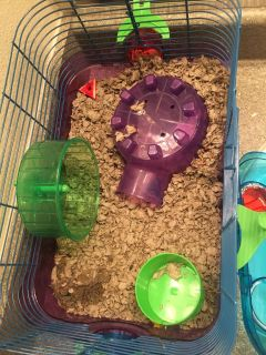 Black teddy bear hamster and cage