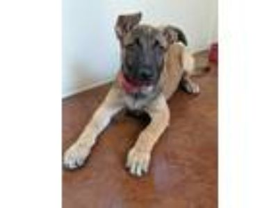 Craigslist - Dogs for Adoption Classifieds in Salinas