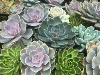 Succulents, Mystery Boxes, and Arrangements!