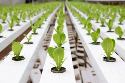 Hydroponic indoor growing supplies - Plant Grow Lights