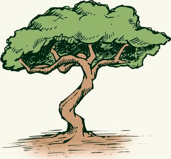 Tree Work Wanted