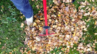 Complete Fall Cleanup - Yard Cleanup
