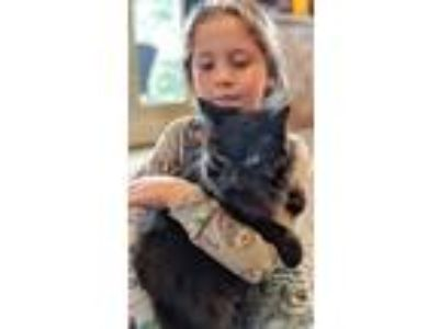 Adopt Lulu and Phoebe - Offered by Owner Senior Sisters a Domestic Longhair /