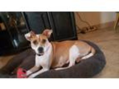 Adopt Pepper a Tan/Yellow/Fawn - with White Terrier (Unknown Type