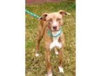 Adopt Charley Terrific a Terrier (Unknown Type, Medium) / Mixed dog in