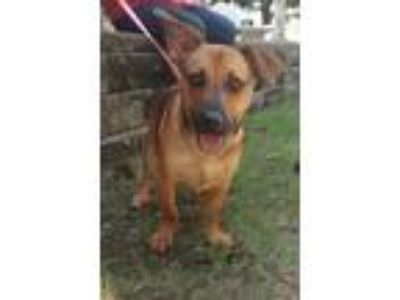 Adopt May a Terrier (Unknown Type, Medium) / Terrier (Unknown Type