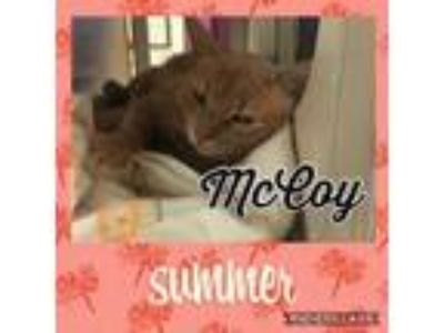 Adopt McCoy a Tan or Fawn Domestic Shorthair / Domestic Shorthair / Mixed cat in