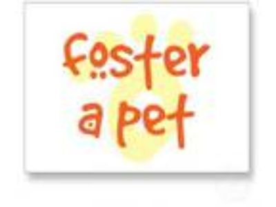 Adopt FOSTERS NEEDED a Rat Terrier