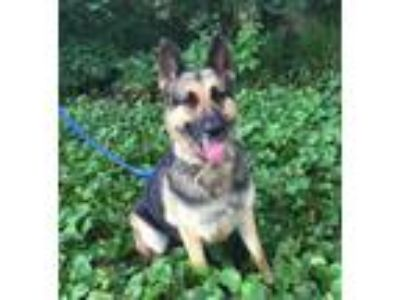 Adopt Leska a German Shepherd Dog