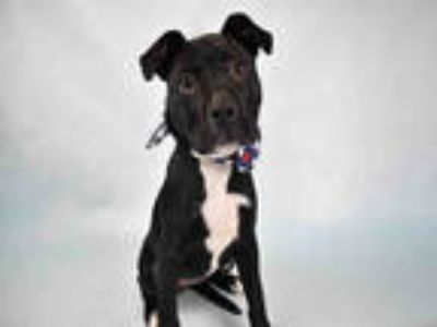 Adopt ROXIE a Black Mixed Breed (Medium) / Mixed dog in Ft Lauderdale
