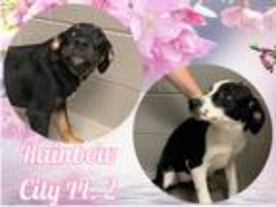 Adopt Rainbow Hounds Pt. 2 a Tricolor (Tan/Brown & Black & White) Hound (Unknown