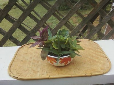 Beautiful Autumn Leaves Planter Full of Mixed Succulents