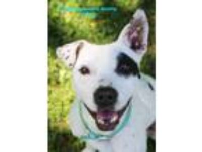 Adopt Tootie a White Mixed Breed (Large) / Mixed dog in Boone, NC (23678743)