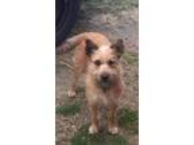 Adopt June a Tan/Yellow/Fawn Terrier (Unknown Type, Medium) / Mixed dog in