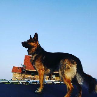 Pet Sitting, Dog Boarding, Dog walks