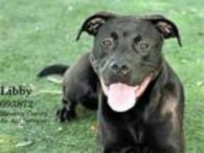 Adopt LIBBY a Brown/Chocolate Labrador Retriever / Mixed dog in Palmetto