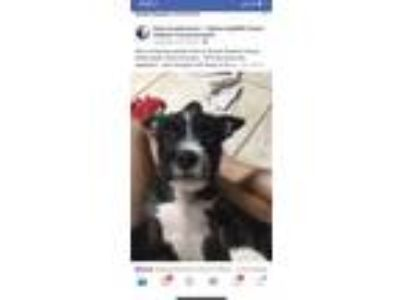 Adopt Vern Spaces a Black - with White Border Collie / Terrier (Unknown Type