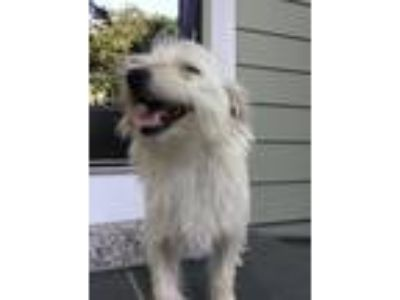 Adopt Luke Skybarker a Terrier (Unknown Type, Medium) / Mixed dog in Alexandria