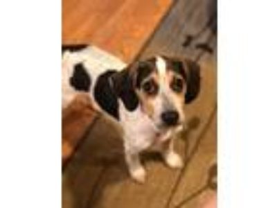 Adopt Bennet Sisters: Kitty a Beagle
