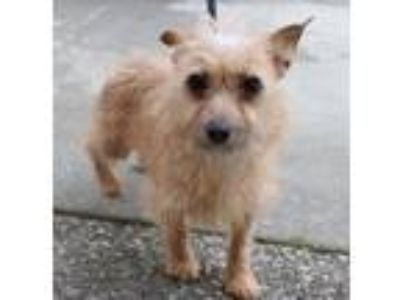 Adopt Winter a Terrier (Unknown Type, Medium) / Mixed dog in Chico