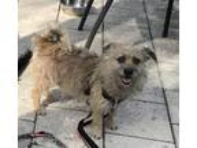 Adopt Duncan a Terrier (Unknown Type, Small) / Mixed dog in Ft.