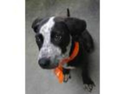 Adopt Euro a Black Terrier (Unknown Type, Small) / Mixed dog in Columbiana
