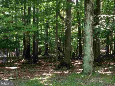 Lot 1 9th St Hammonton, 20 Acre wooded building lot.