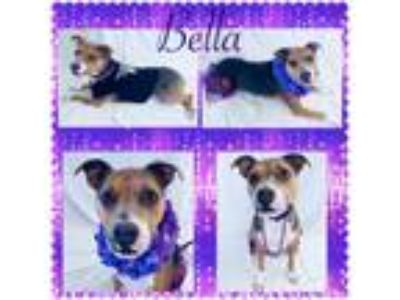 Adopt Bella - Pawsitive Direction Program a Pit Bull Terrier