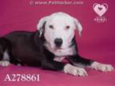 Adopt ISABELL a Border Collie, Mixed Breed