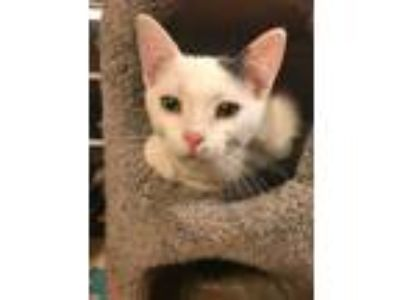 Adopt Dolby a Turkish Van