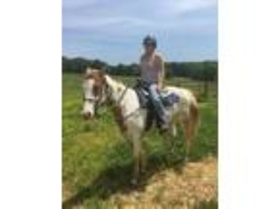 Craigslist - Horses for sale Classifieds in Morgantown, Kentucky