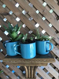 Set of three enamel coffee cups for your window sill