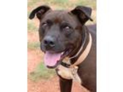 Adopt Riley a Mixed Breed