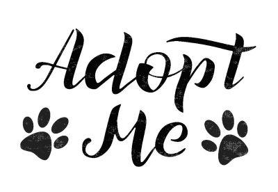 Pet Adoption Event Co-op Dover Aug 11, 2018 8am-12pm