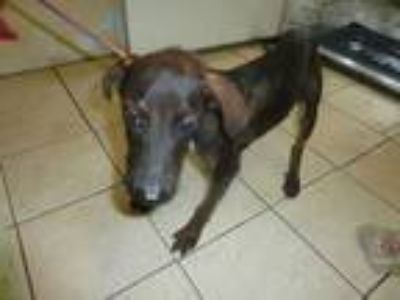 Adopt Hibiscus a Mixed Breed