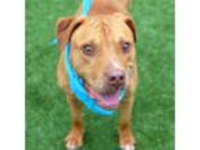 Adopt Red a Mixed Breed
