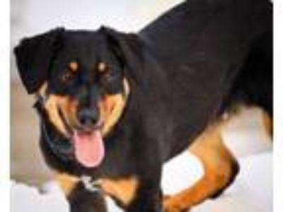 Adopt Byron a Corgi, Rottweiler