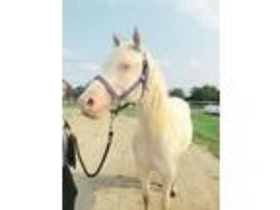 Tender Crystal Bar Cremello Mare